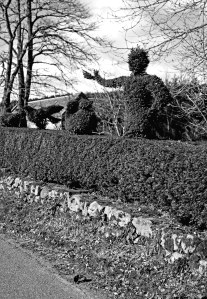 topiary 004 b and w_edited-1